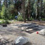 Peninsula campground ponderosa sp