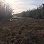 Santee coastal reserve wildlife management area