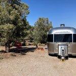 Blue tree group camp