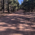 Forest road 172
