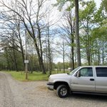 Yellow butterfly campground