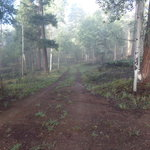 Forest road 5