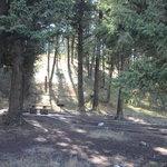 Stoddard creek campground