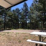 Peregrine pines famcamp