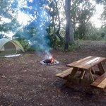 Live oak landing stockton al
