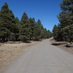 Forest road 171