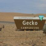 Gecko campground