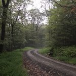 Michaux state forest