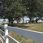 Equine complex rv park