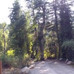 Willow flat campground caribou targhee nf