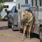 City of socorro rodeo soccer complex rv park