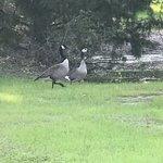 Cedar oaks rv park texas