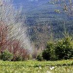 Columbia river wetlands rv park