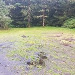 Forest road 29 washington