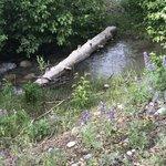 Spread creek meadow dispersed