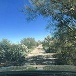 Cattle tank road