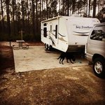 Cary state forest campground
