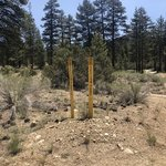 Coon creek yellow post sites