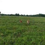 Crossing creeks farm