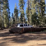 Needles point dispersed camping
