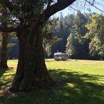 Amacher park