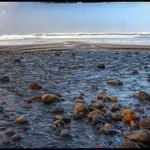 Beverly beach state park