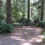 Jesse m honeyman memorial state park