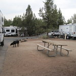 Jasper point campground