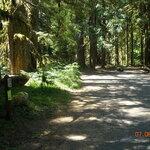 Lost creek campground mt hood nf