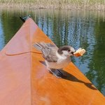Mallard marsh hosmer lake