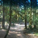 Mckenzie bridge campground