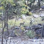 Bog springs campground
