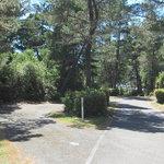 Waxmyrtle campground