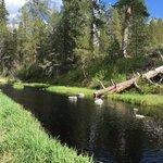 Williamson river campground