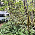 Goodell creek campground