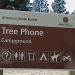 Tree phones