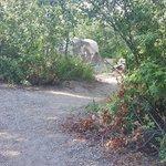 Alpine campground caribou targhee nf