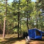 Harold parker state forest