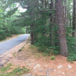 Shawme crowell state forest