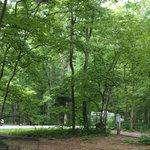 Houck area campground