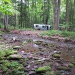 Elk lick campsites 100 105