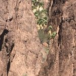 Kofa national wildlife refuge palm canyon