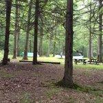 Penn roosevelt state park