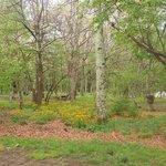 Big meadows campground shenandoah np