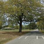 Gosnolds hope park