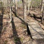 Oak ridge campground prince william forest