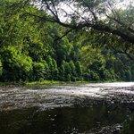 Riverside campground watoga sp