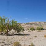 Box canyon mecca hills