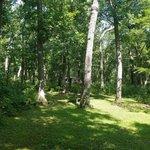 Hononegah forest preserve