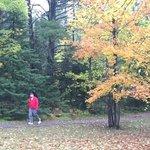 Farquar metsa tourist park